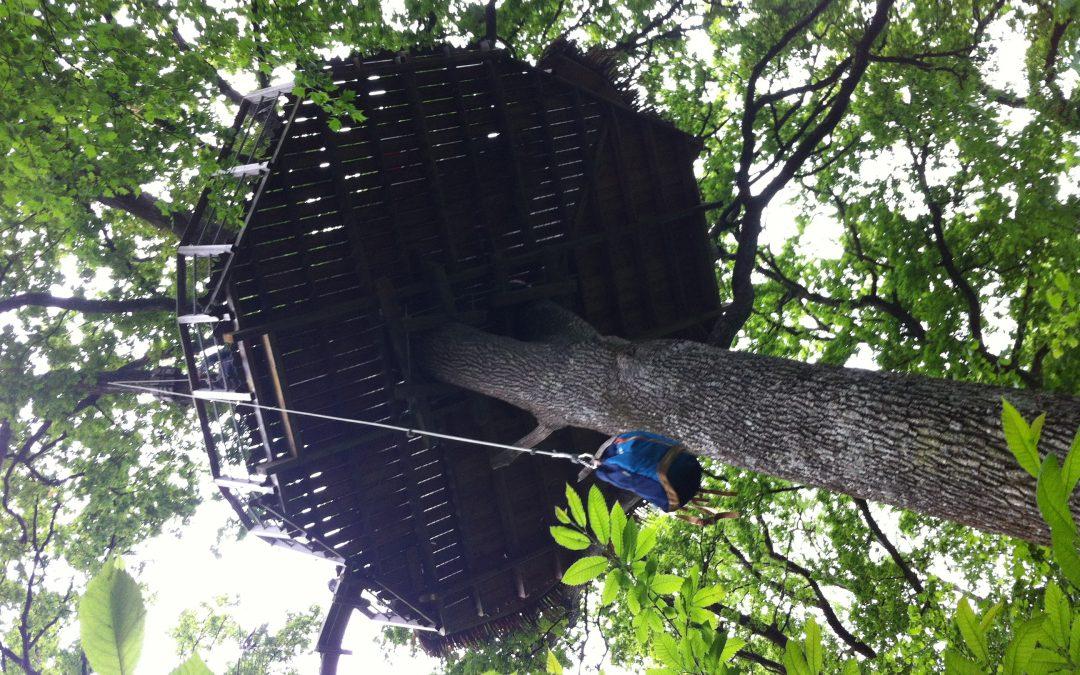Dormir dans un arbre