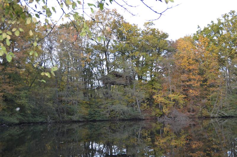 cabane-dans-les-arbres-famille-lisbonne